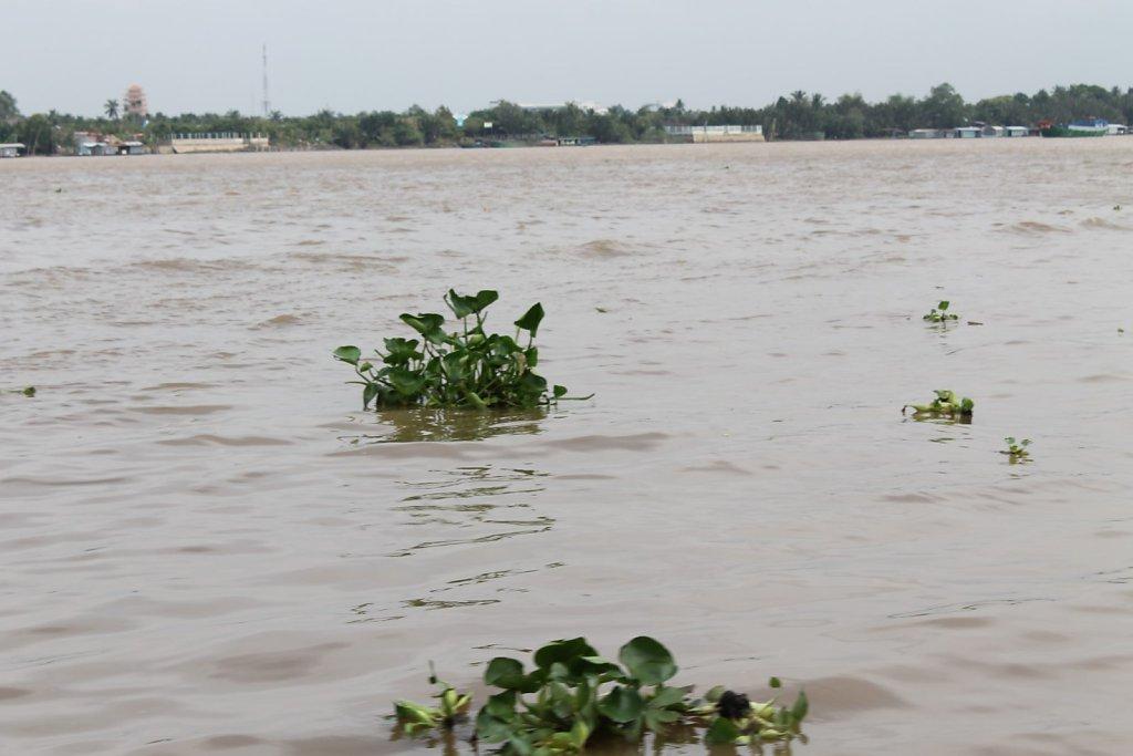 Mekong river (Vietnam)