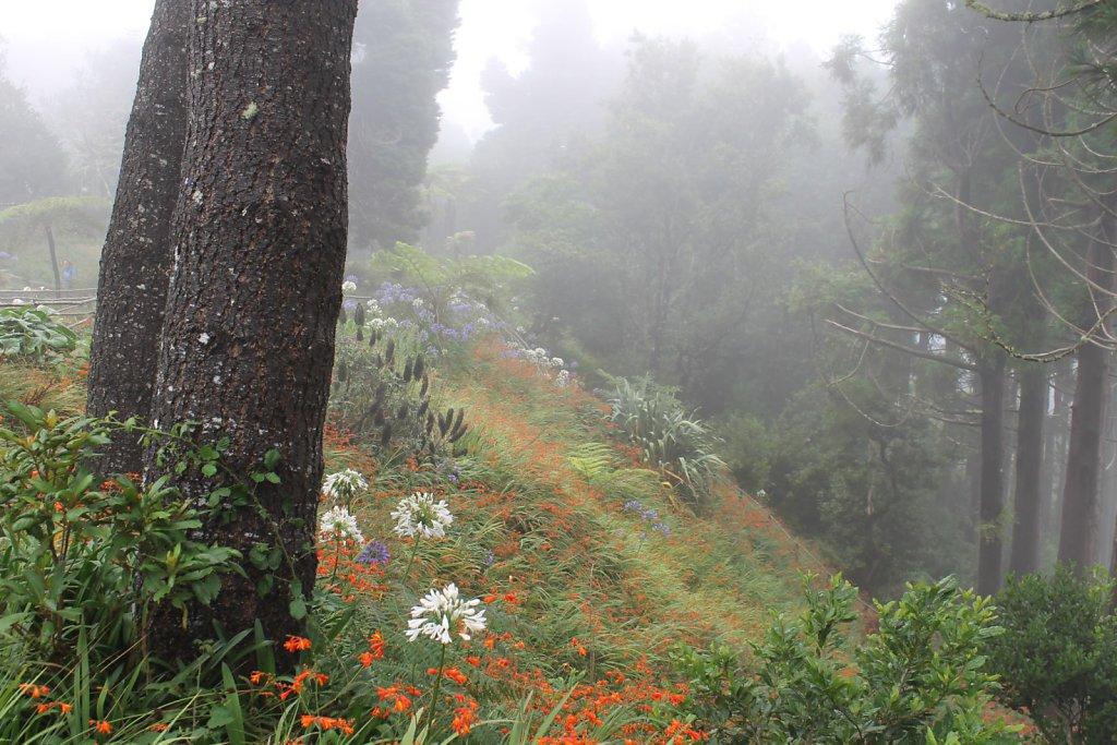 Levada Ribeiro Frio - Portela (Madeira, Portugal)