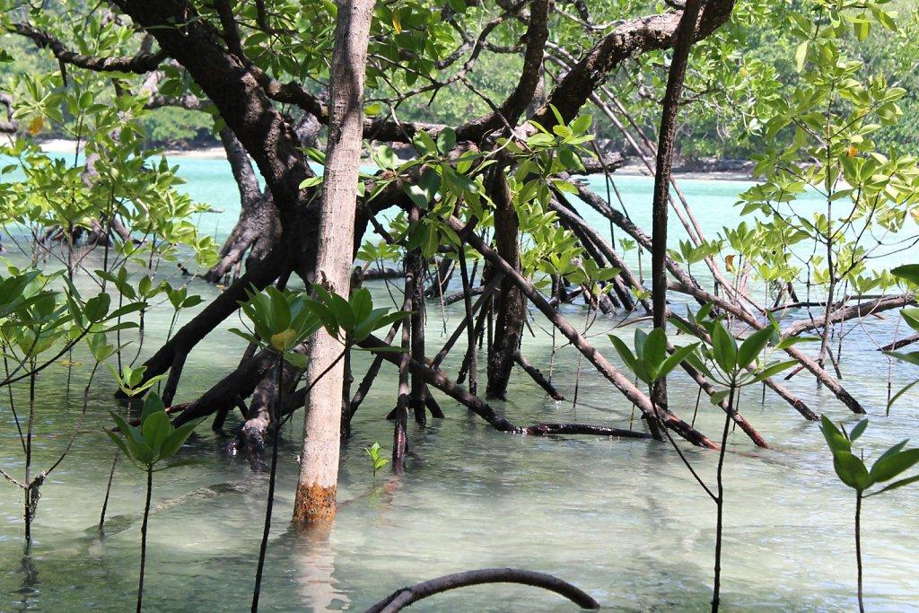 Surin Islands (Thailand)
