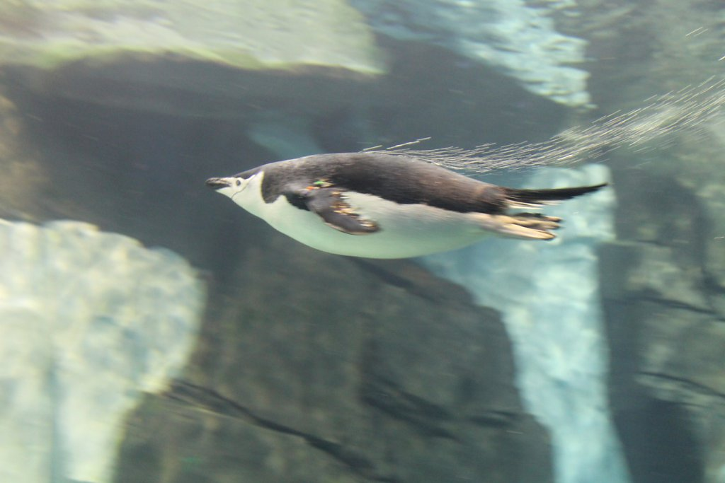 Sea World Theme Park (Orlando, USA)